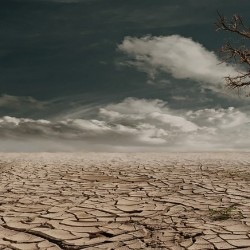 Droughts and Biology